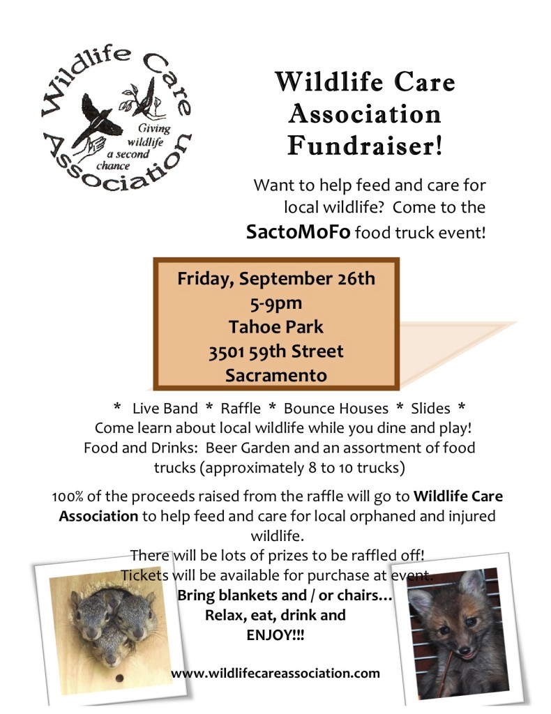 Help local wildlife at a SactoMoFo Event