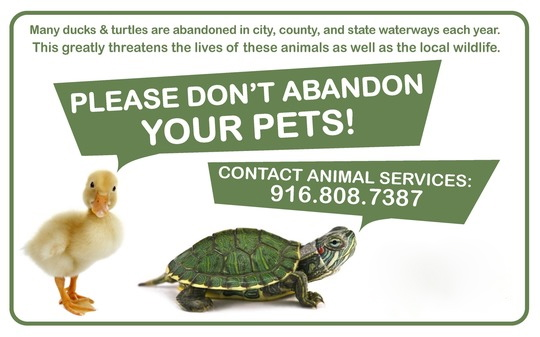 City Animal Services Information—Please Don't Abandon Pets